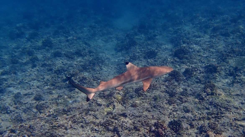 V družbi morskih psov